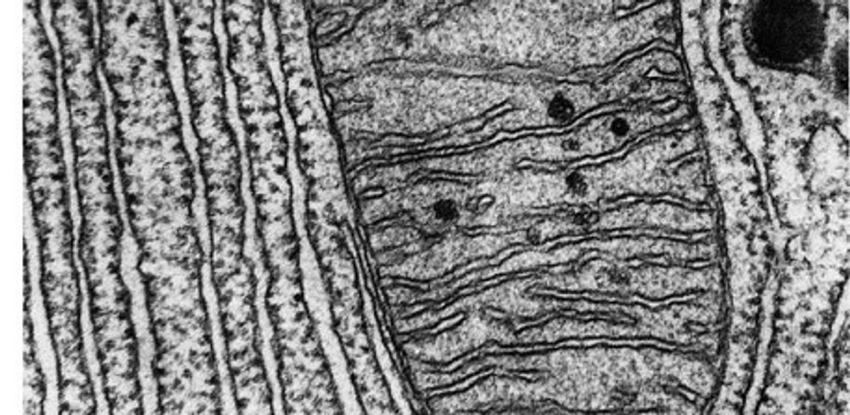 How gene editing can address mitochondrial DNA?