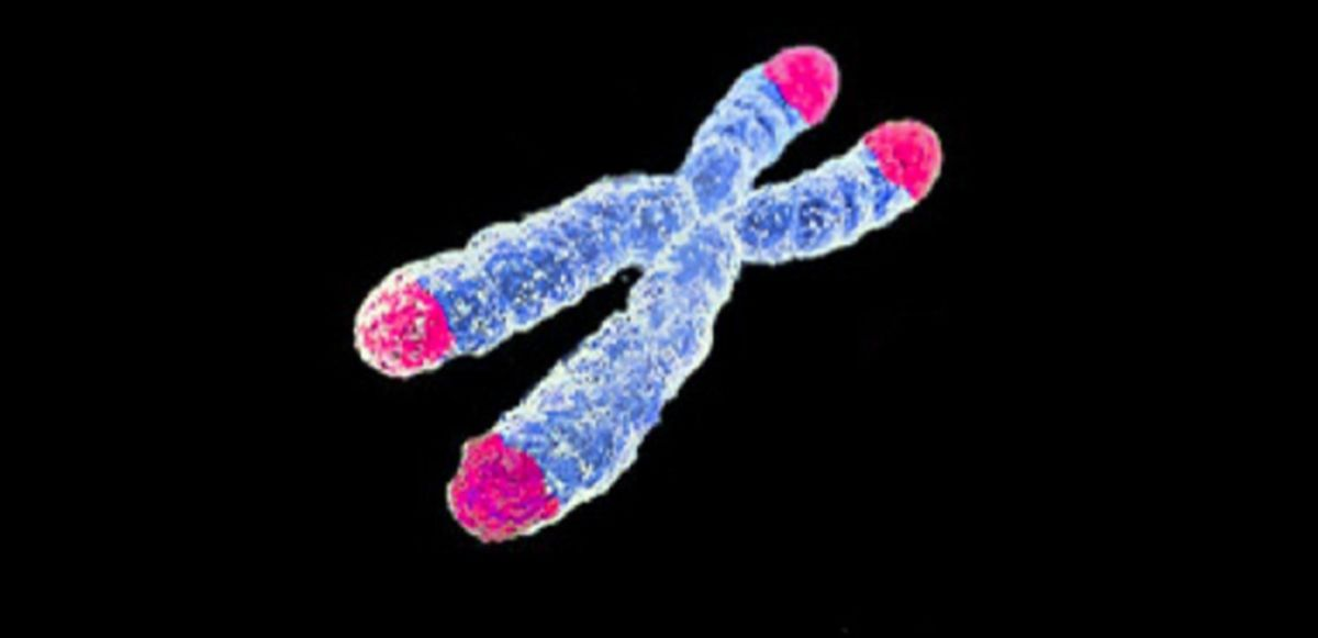 What mechanisms are responsible for telomere shortening in non-dividing cells?