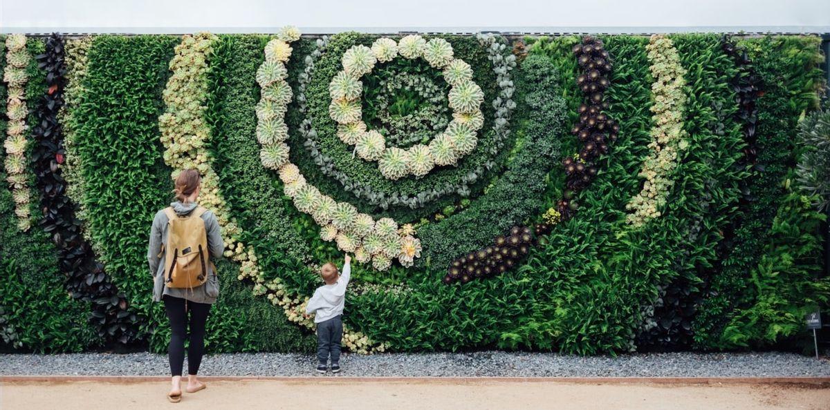 How do I create an indoor wall garden?