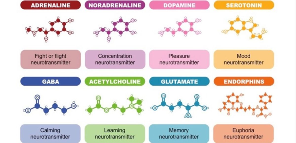 What natural foods boost neurotransmitters that could therapeutically affect neurological and/or neurodegenerative diseases?